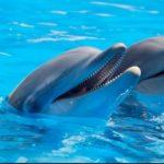Все умрут естественной смертью: новый закон закроет дельфинарии по всей России