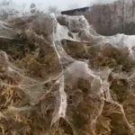 «Это страшно, апокалипсис какой-то»: странные вещи творятся в Анапе