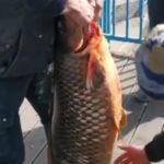«Зачем загубили? Есть-то нельзя»: удивительный улов ждал рыбаков в парке Минного городка