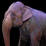 Слоны устроили драку во время шоу в цирке