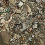 «Там еще ботинок лежит»: непонятная находка обнаружена в районе Нефтебазы