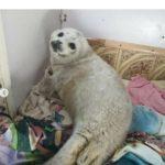 «Оказали медвежью услугу»: морской малыш погиб при спасении
