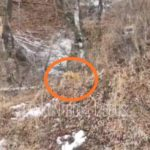 «А если он побежит на нас?»: пара с ребенком встретила хищника в курортном районе Приморья
