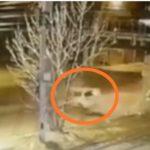«Боже, он жив?»: водитель легковушки «впечатался» в опору моста во Владивостоке
