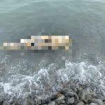 «Без головы и запах ужас»: труп резко всплыл в бухте Тихой