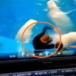 «Это насилие в любом случае»: вокруг Приморского океанариума назревает скандал