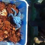 «Впервые такое увидел»: редчайший улов попался в сети рыбакам