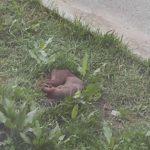 «Что за беспредел и жестокость?»: выстрелы разбудили жителей Приморья