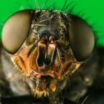 «Просто сбивают с ног»: как мухи терроризируют целый посёлок