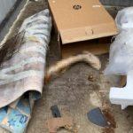 Нога на мусорке, остальное - на свалке: жуткая находка обнаружена в Приморье