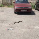 «Хорошо, что я там больше не живу»: огромная змея замечена рядом с детским садом