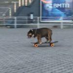 """Собака на скейте: позитивный """"красавчик"""" удивил очевидцев"""