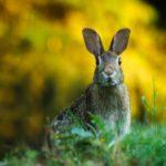 Кролики – не только ценный мех. Дачница придумала, как побороть стресс