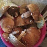 «Так вот где они все»: названо место, откуда грибы «выносят ведрами»